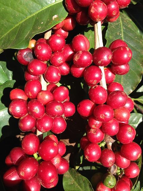 coffee-645514_640